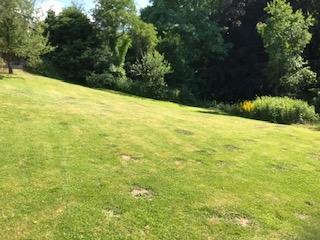 Sommerimpressionen Praxis Burmester und Garten